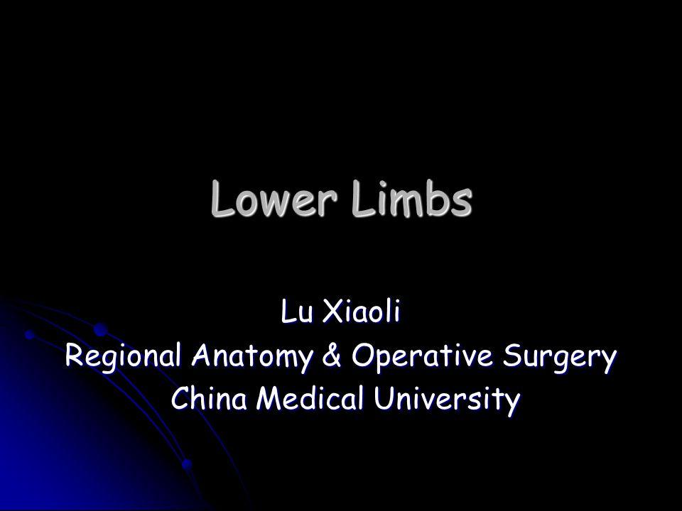 Lower Limbs Lu Xiaoli Regional Anatomy & Operative Surgery China Medical University China Medical University