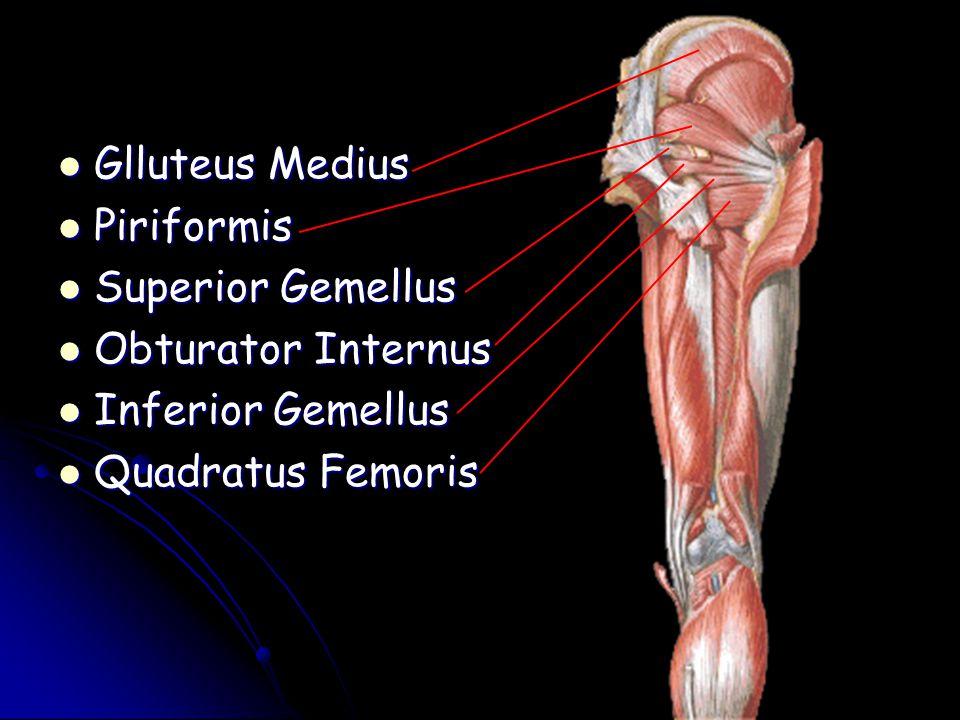 Glluteus Medius Glluteus Medius Piriformis Piriformis Superior Gemellus Superior Gemellus Obturator Internus Obturator Internus Inferior Gemellus Infe