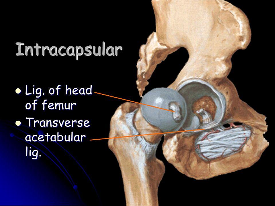 Intracapsular Lig. of head of femur Lig. of head of femur Transverse acetabular lig. Transverse acetabular lig.