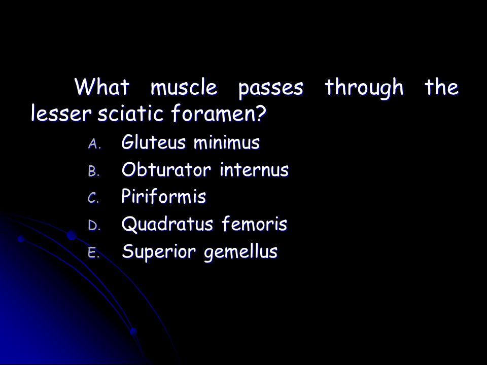 What muscle passes through the lesser sciatic foramen? A. Gluteus minimus B. Obturator internus C. Piriformis D. Quadratus femoris E. Superior gemellu