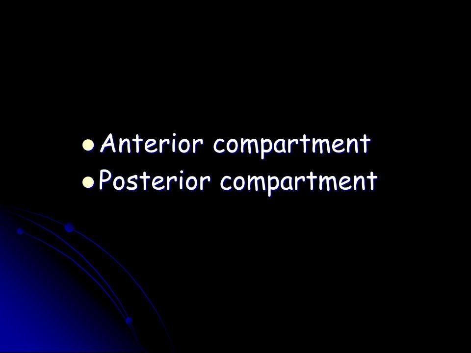 Anterior compartment Anterior compartment Posterior compartment Posterior compartment
