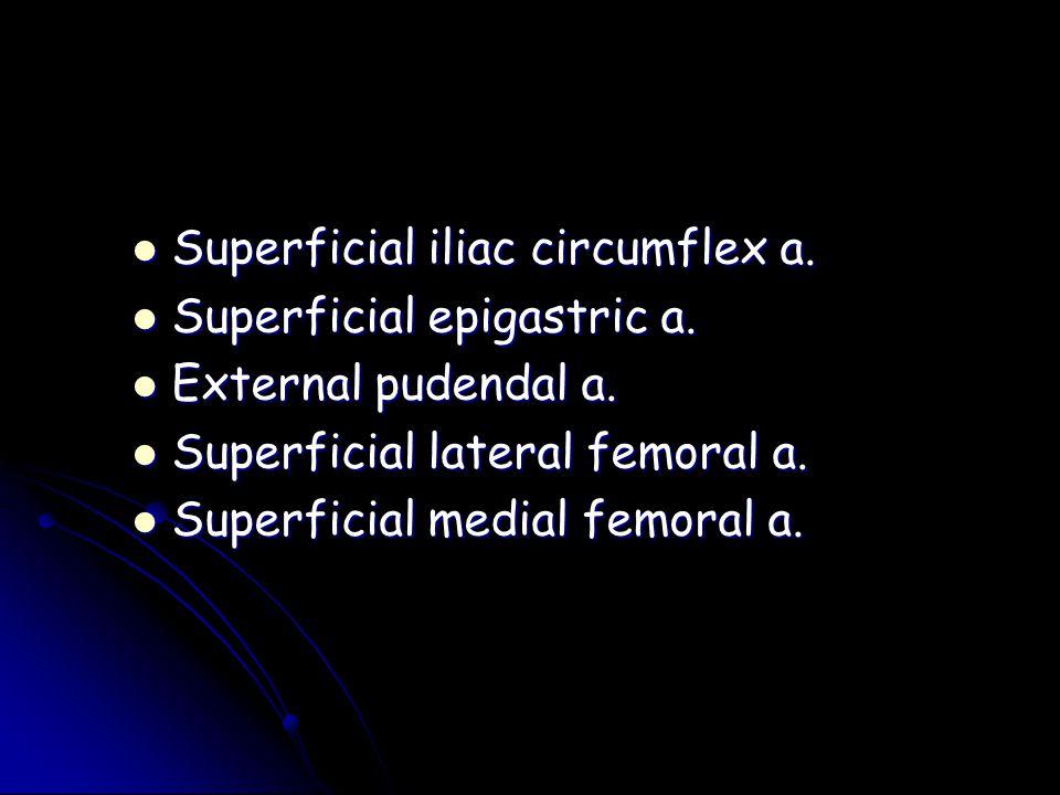 Superficial iliac circumflex a. Superficial iliac circumflex a. Superficial epigastric a. Superficial epigastric a. External pudendal a. External pude