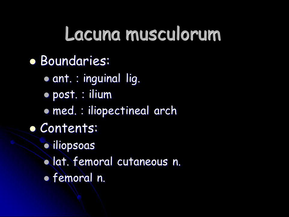 Lacuna musculorum Boundaries: Boundaries: ant. : inguinal lig. ant. : inguinal lig. post. : ilium post. : ilium med. : iliopectineal arch med. : iliop