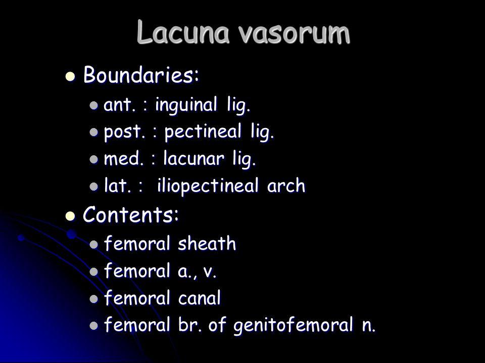 Lacuna vasorum Boundaries: Boundaries: ant. : inguinal lig. ant. : inguinal lig. post. : pectineal lig. post. : pectineal lig. med. : lacunar lig. med