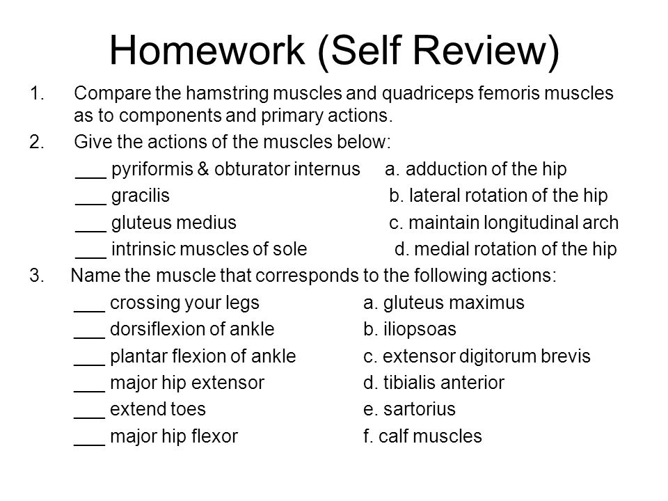 Homework (Self Review) 1.Compare the hamstring muscles and quadriceps femoris muscles as to components and primary actions. 2.Give the actions of the