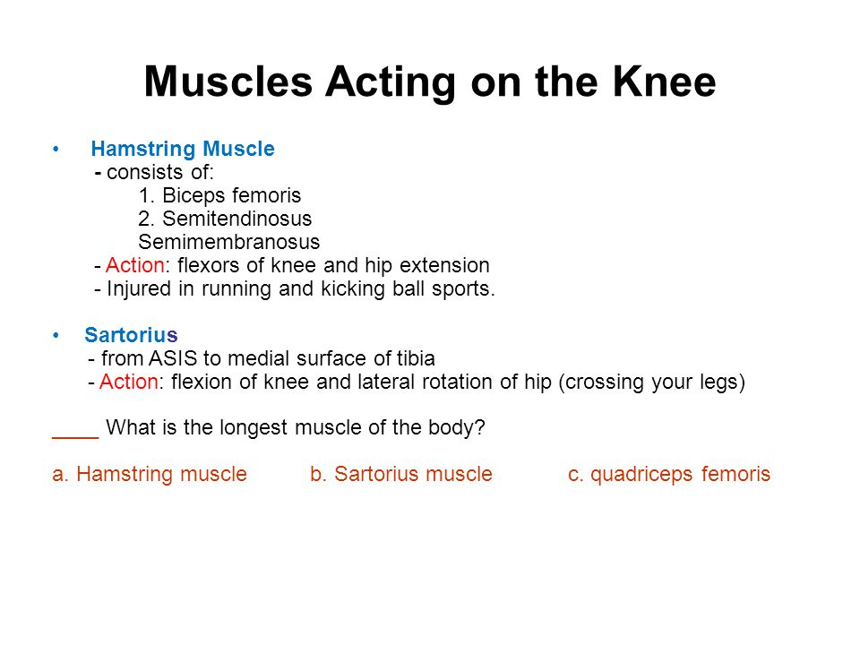 Muscles Acting on the Knee Anterior thigh muscles-extends knee joint Quadriceps femoris tendon insert to tibial tuberosity via patellar ligament; consists of: 1.vastus lateralis 2.