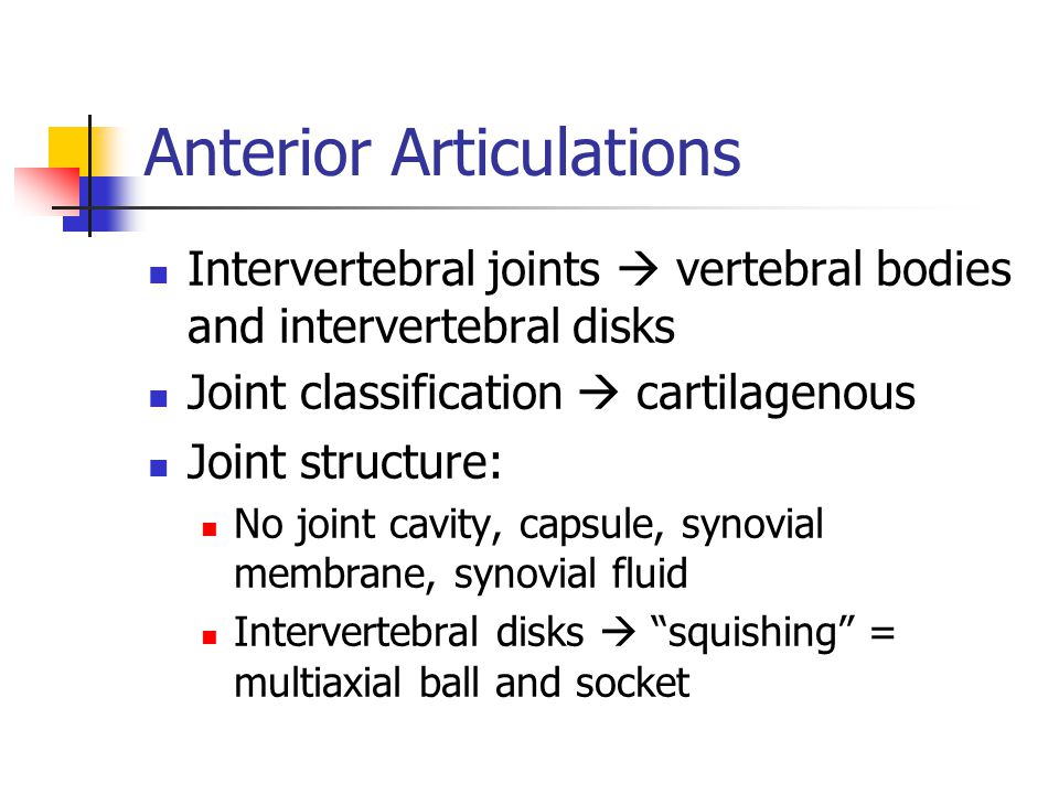 Anterior Articulations Intervertebral joints  vertebral bodies and intervertebral disks Joint classification  cartilagenous Joint structure: No joint cavity, capsule, synovial membrane, synovial fluid Intervertebral disks  squishing = multiaxial ball and socket