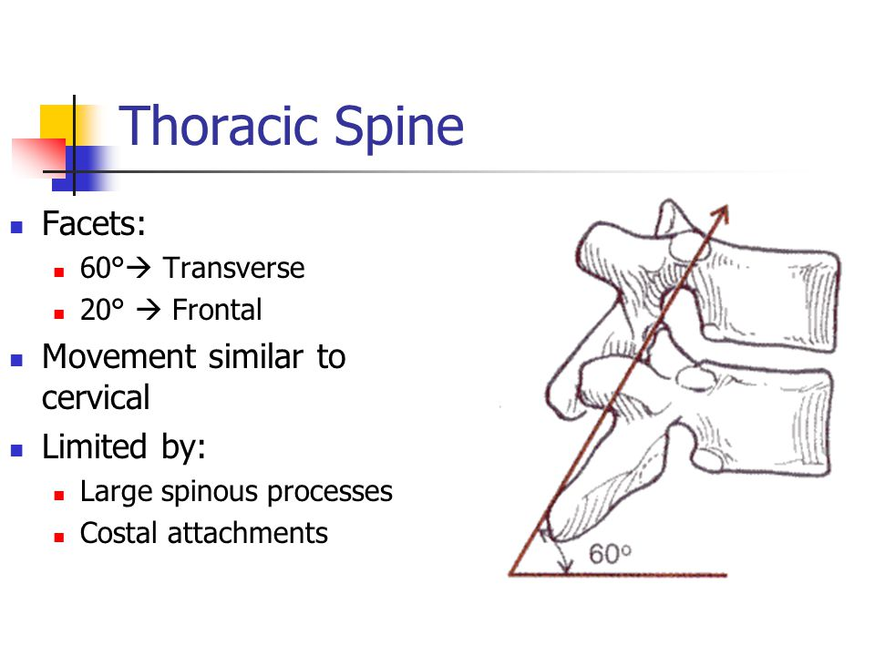 Thoracic Spine Facets: 60°  Transverse 20°  Frontal Movement similar to cervical Limited by: Large spinous processes Costal attachments