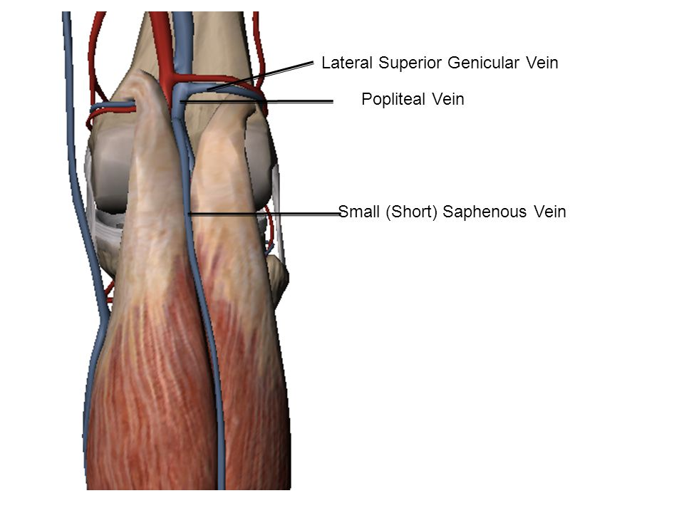 Popliteal Vein Small (Short) Saphenous Vein Lateral Superior Genicular Vein