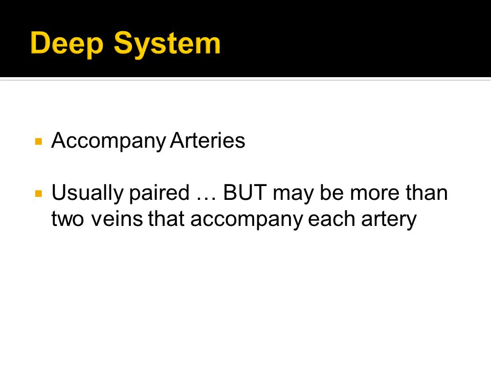  Accompany Arteries  Usually paired … BUT may be more than two veins that accompany each artery