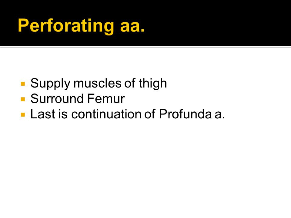  Supply muscles of thigh  Surround Femur  Last is continuation of Profunda a.