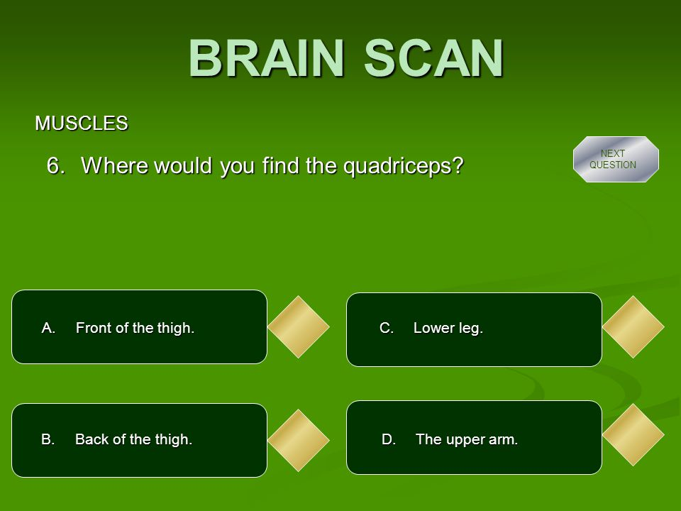BRAIN SCAN MUSCLES A.By ligaments. 7. How are muscles attached to bone.