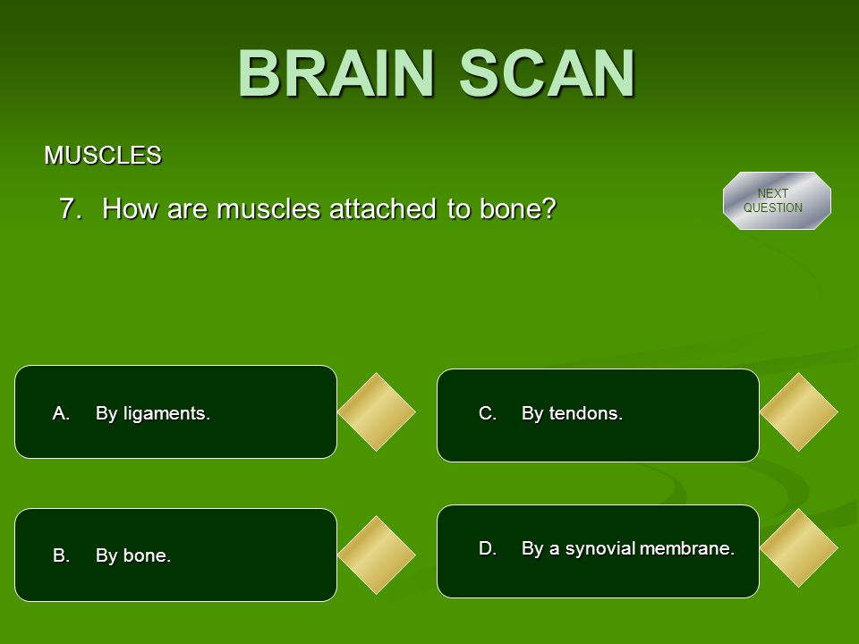EXTENSION QUESTIONS  How does your nervous system help your muscles to work.