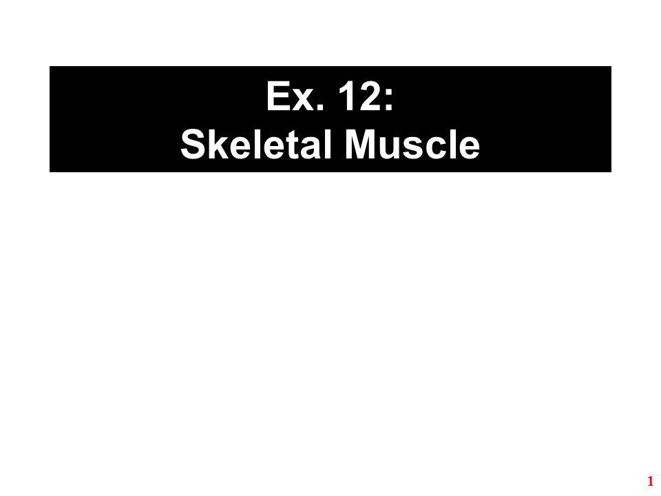 Ex. 12: Skeletal Muscle 1