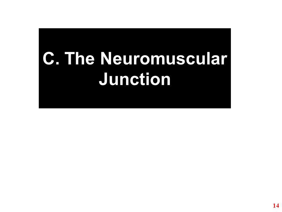 C. The Neuromuscular Junction 14
