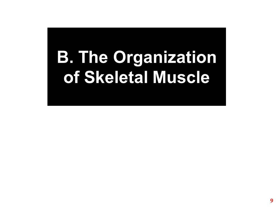B. The Organization of Skeletal Muscle 9