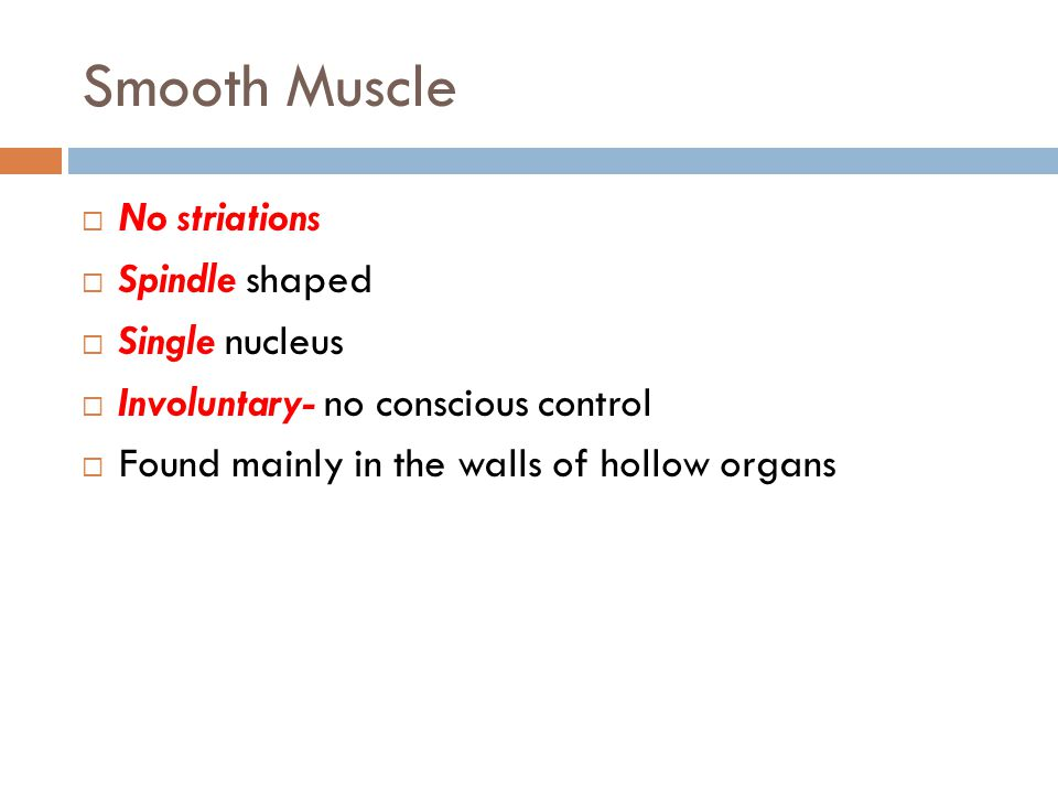 Smooth Muscle  No striations  Spindle shaped  Single nucleus  Involuntary- no conscious control  Found mainly in the walls of hollow organs
