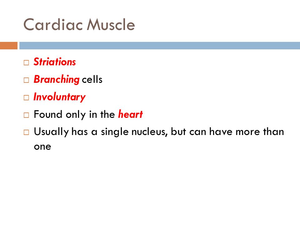 Cardiac Muscle  Striations  Branching cells  Involuntary  Found only in the heart  Usually has a single nucleus, but can have more than one