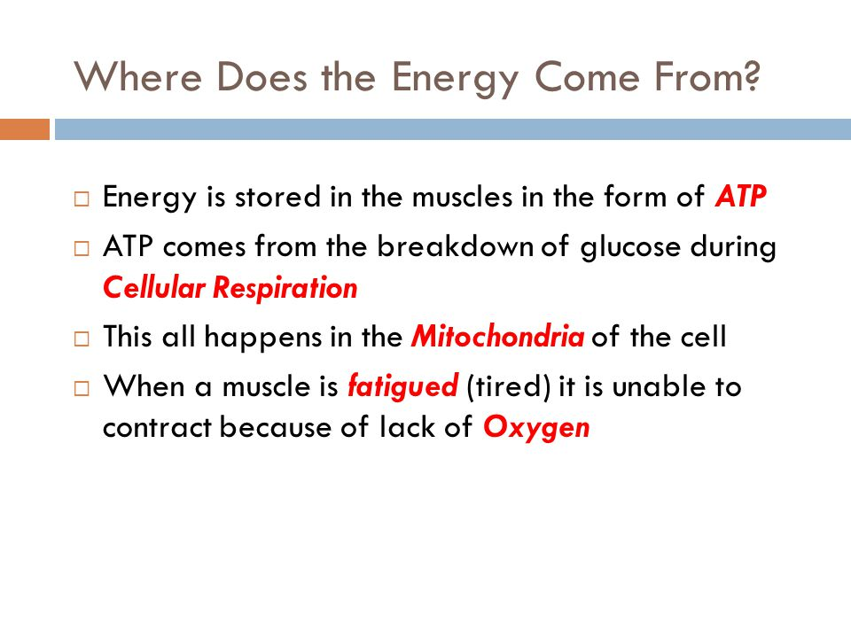 Where Does the Energy Come From?  Energy is stored in the muscles in the form of ATP  ATP comes from the breakdown of glucose during Cellular Respir