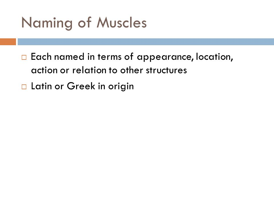 Naming of Muscles  Each named in terms of appearance, location, action or relation to other structures  Latin or Greek in origin
