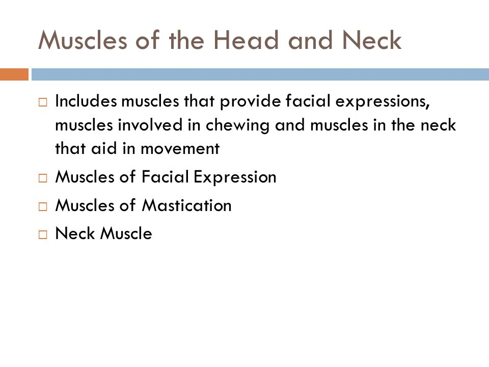 Muscles of the Head and Neck  Includes muscles that provide facial expressions, muscles involved in chewing and muscles in the neck that aid in movem
