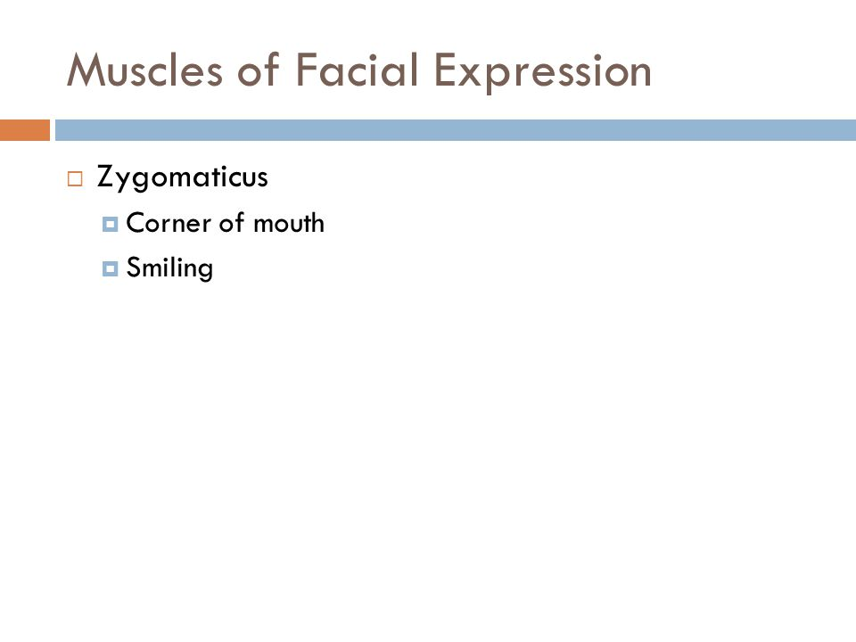 Muscles of Facial Expression  Zygomaticus  Corner of mouth  Smiling