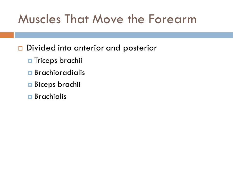 Muscles That Move the Forearm  Divided into anterior and posterior  Triceps brachii  Brachioradialis  Biceps brachii  Brachialis