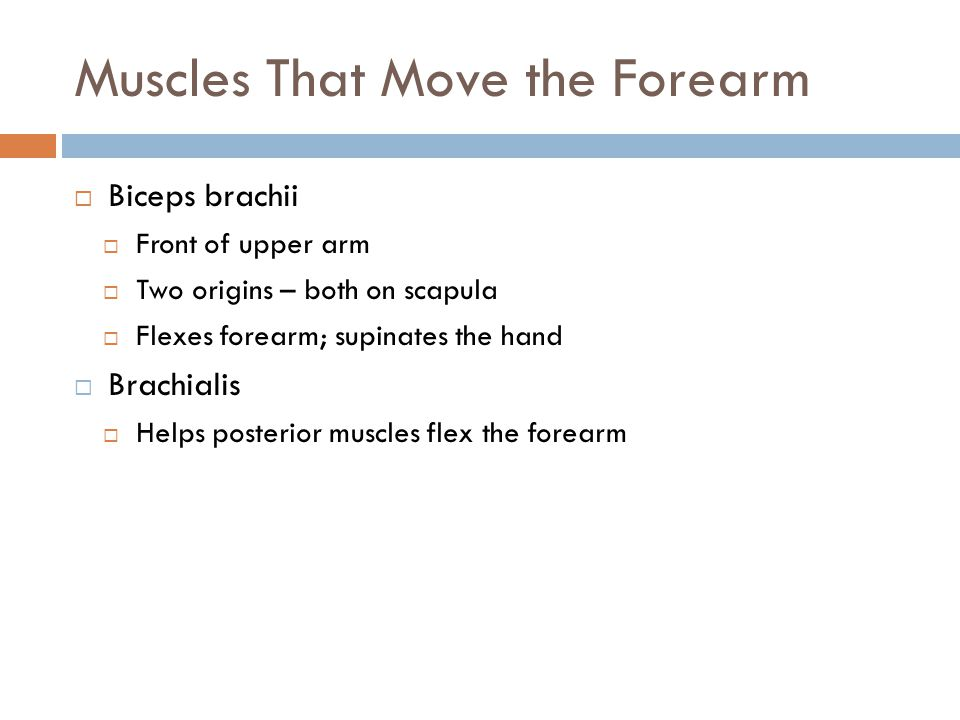 Muscles That Move the Forearm  Biceps brachii  Front of upper arm  Two origins – both on scapula  Flexes forearm; supinates the hand  Brachialis