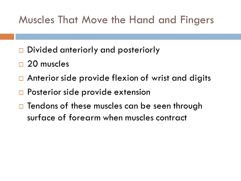 Muscles That Move the Hand and Fingers  Divided anteriorly and posteriorly  20 muscles  Anterior side provide flexion of wrist and digits  Posteri