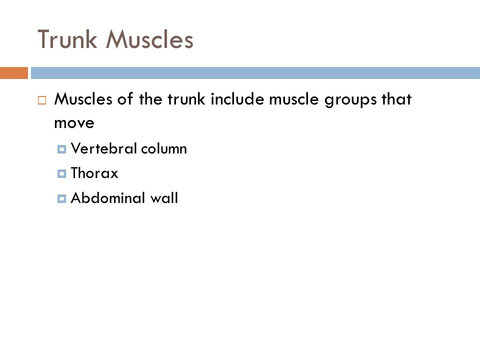 Trunk Muscles  Muscles of the trunk include muscle groups that move  Vertebral column  Thorax  Abdominal wall