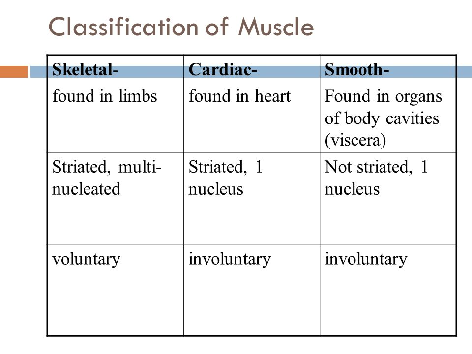 Classification of Muscle Skeletal- found in limbs Cardiac- found in heart Smooth- Found in organs of body cavities (viscera) Striated, multi- nucleate