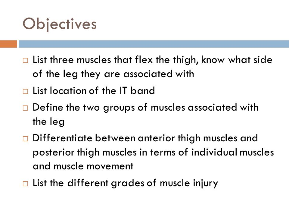 Objectives  List three muscles that flex the thigh, know what side of the leg they are associated with  List location of the IT band  Define the tw