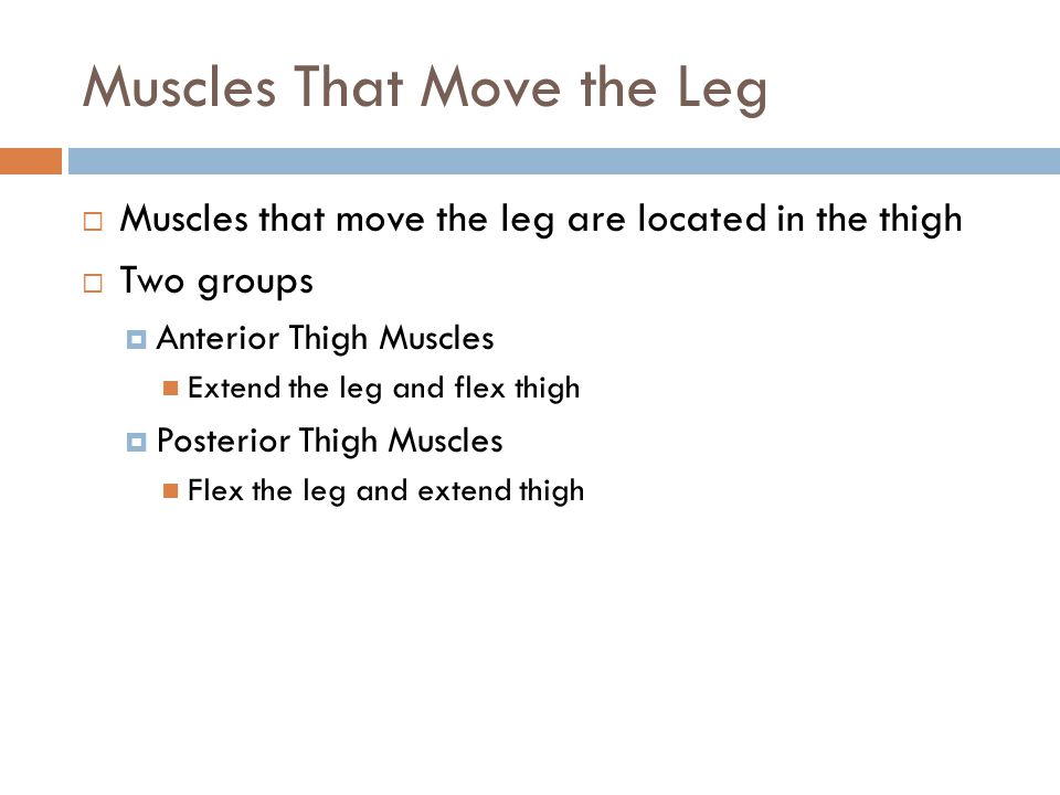 Muscles That Move the Leg  Muscles that move the leg are located in the thigh  Two groups  Anterior Thigh Muscles Extend the leg and flex thigh  P