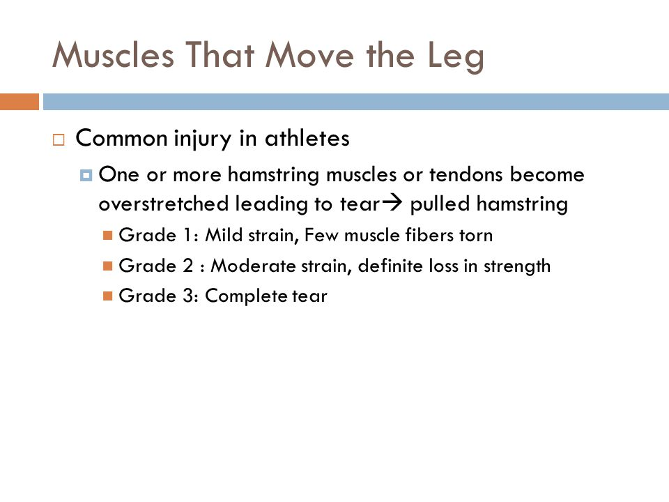 Muscles That Move the Leg  Common injury in athletes  One or more hamstring muscles or tendons become overstretched leading to tear  pulled hamstri