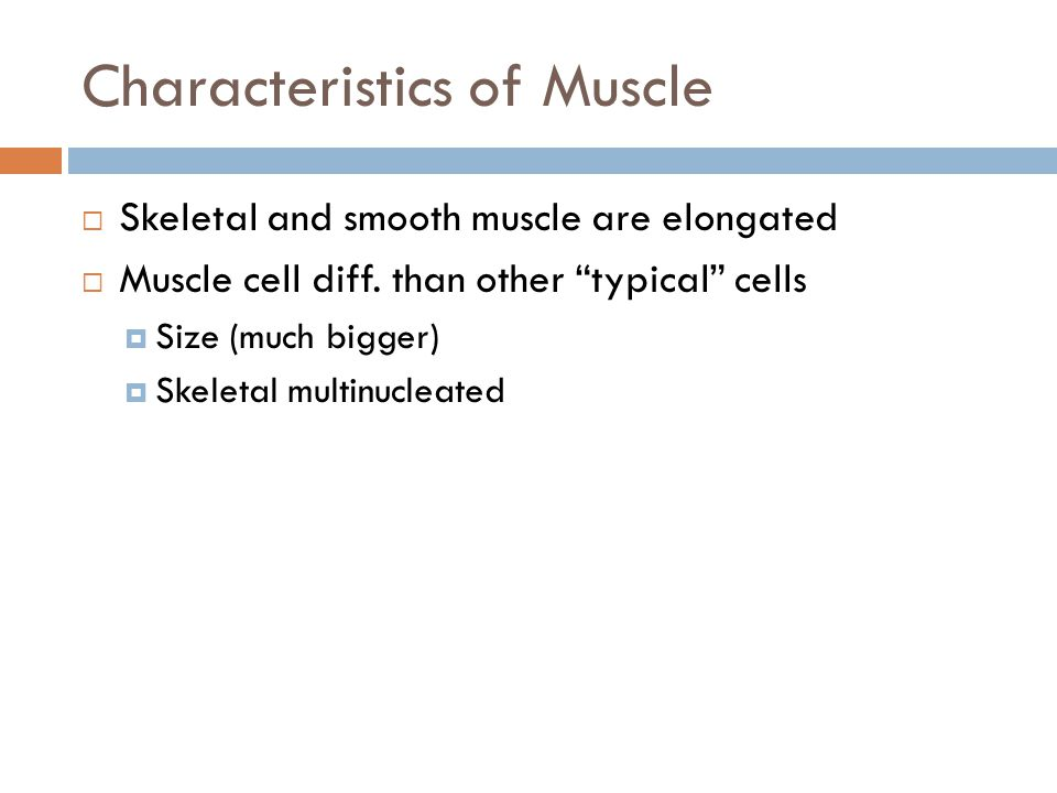 "Characteristics of Muscle  Skeletal and smooth muscle are elongated  Muscle cell diff. than other ""typical"" cells  Size (much bigger)  Skeletal mu"