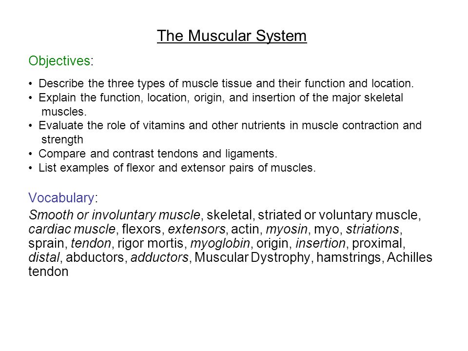 The Muscular System Objectives: Describe the three types of muscle tissue and their function and location. Explain the function, location, origin, and