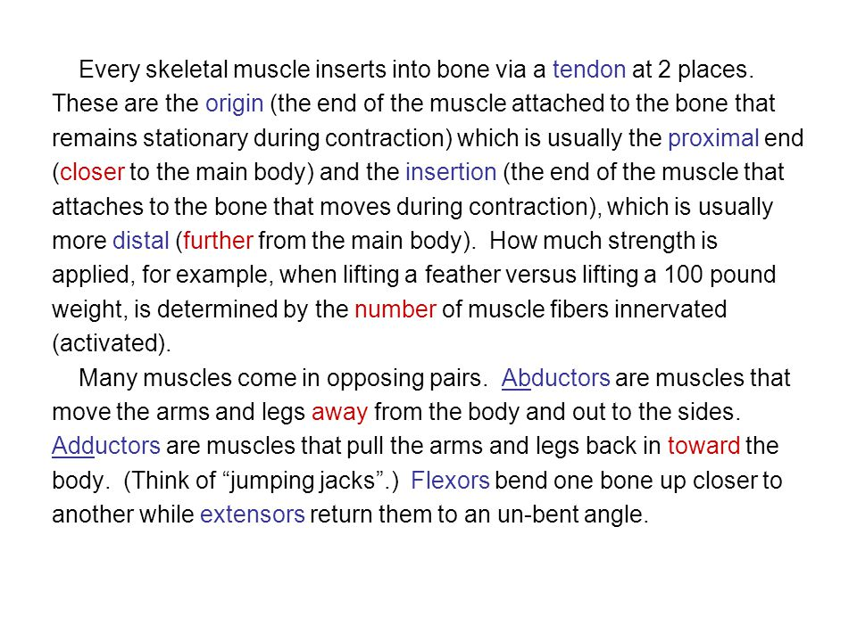 Every skeletal muscle inserts into bone via a tendon at 2 places. These are the origin (the end of the muscle attached to the bone that remains statio