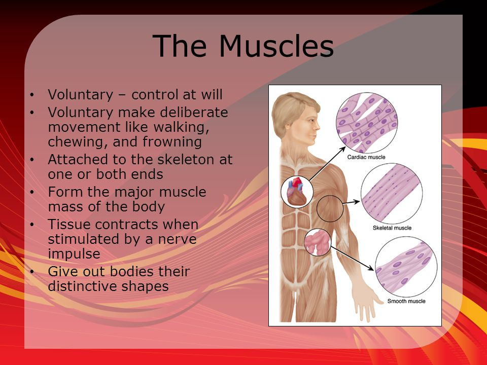 Muscles can be injured in many ways Broken fibers from overextension Bruises Crushing Cuts Tears Painful swelling and weakness