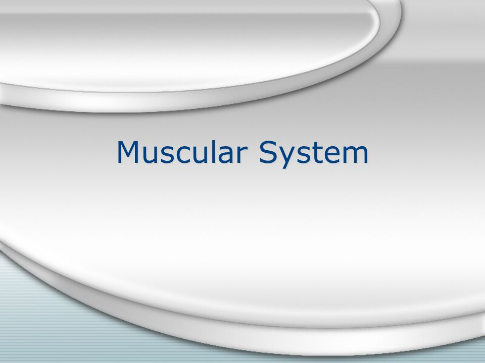 Essential Question How does the muscular system support human life?