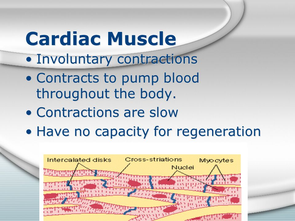 Cardiac Muscle Involuntary contractions Contracts to pump blood throughout the body. Contractions are slow Have no capacity for regeneration Involunta