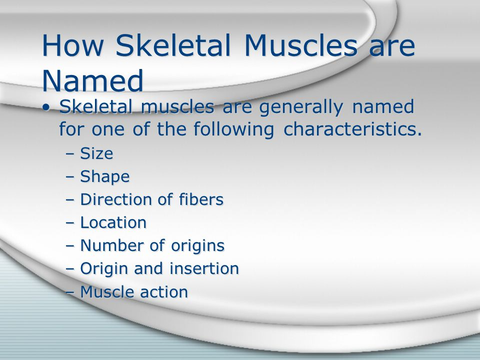 How Skeletal Muscles are Named Skeletal muscles are generally named for one of the following characteristics. –Size –Shape –Direction of fibers –Locat