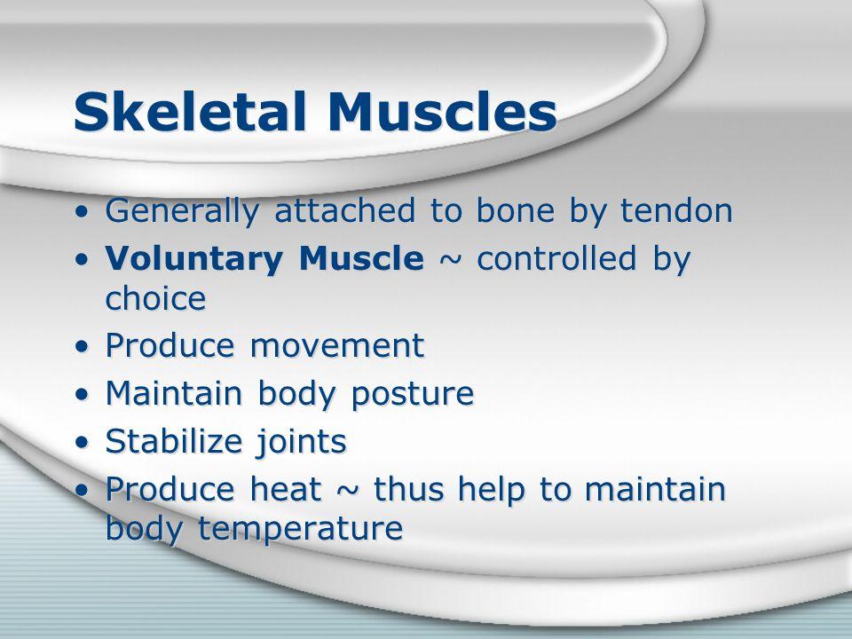 Facial Muscles Buccinator ~ origin is the mandible and maxilla.