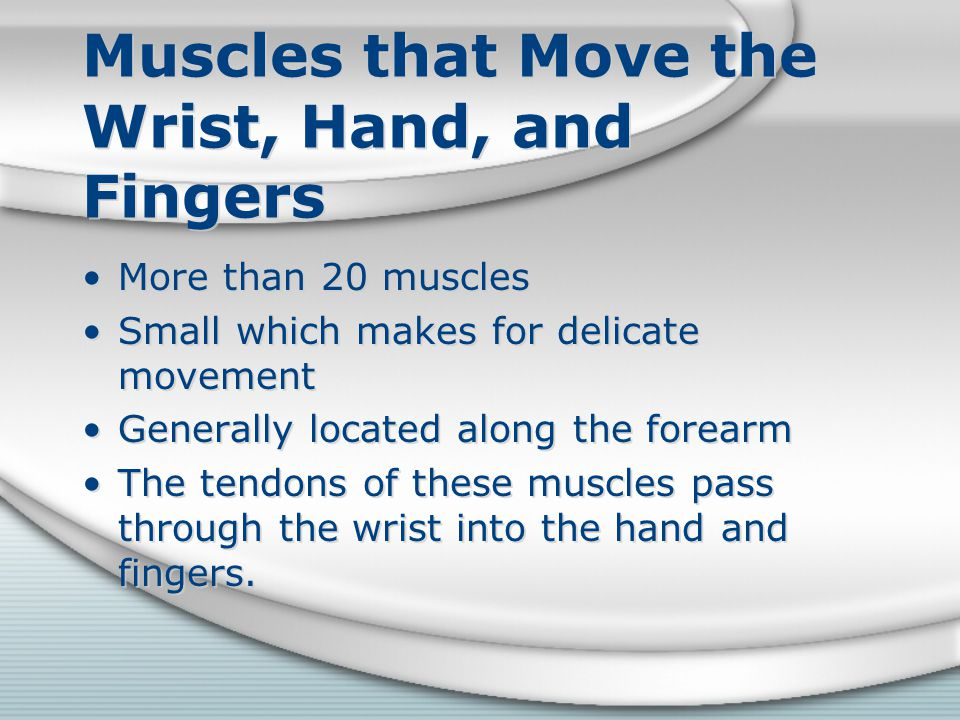 Muscles that Move the Wrist, Hand, and Fingers More than 20 muscles Small which makes for delicate movement Generally located along the forearm The te