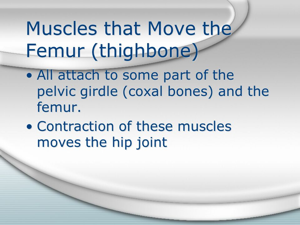 Muscles that Move the Femur (thighbone) All attach to some part of the pelvic girdle (coxal bones) and the femur. Contraction of these muscles moves t
