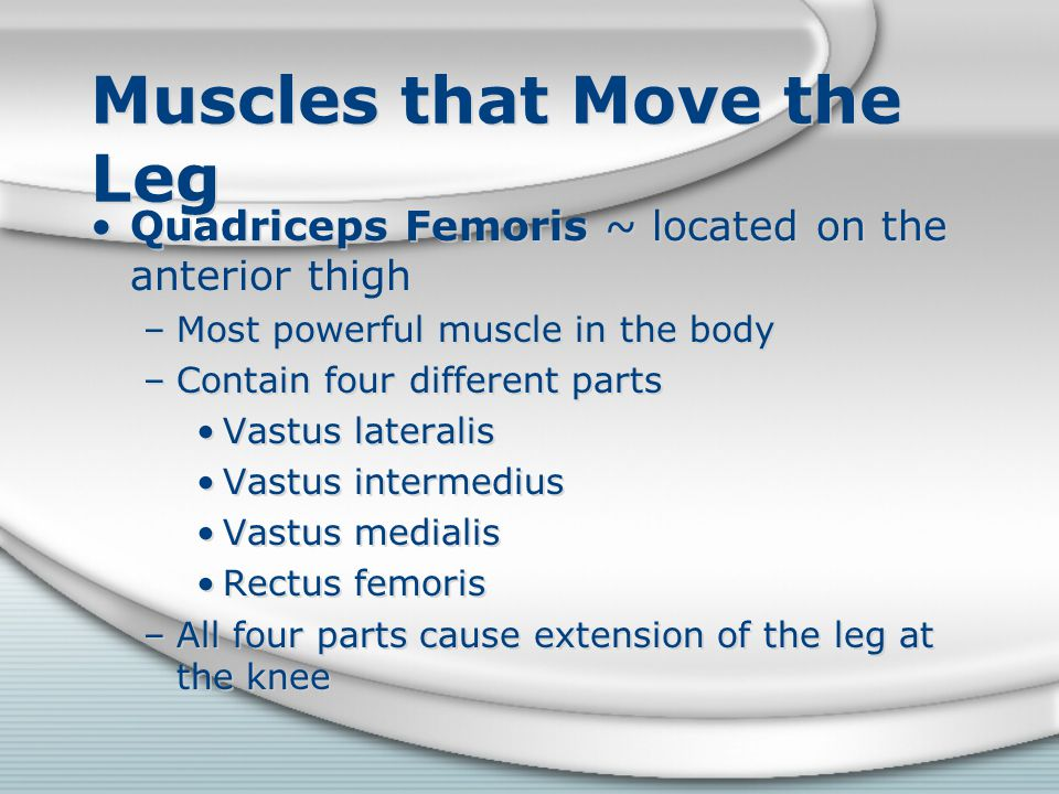 Muscles that Move the Leg Quadriceps Femoris ~ located on the anterior thigh –Most powerful muscle in the body –Contain four different parts Vastus la
