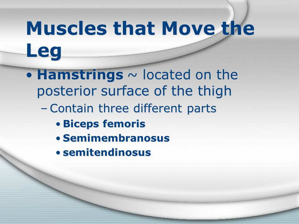 Muscles that Move the Leg Hamstrings ~ located on the posterior surface of the thigh –Contain three different parts Biceps femoris Semimembranosus sem