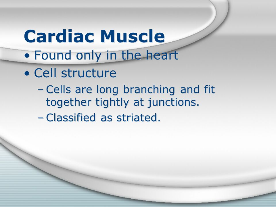 Cardiac Muscle Found only in the heart Cell structure –Cells are long branching and fit together tightly at junctions. –Classified as striated. Found