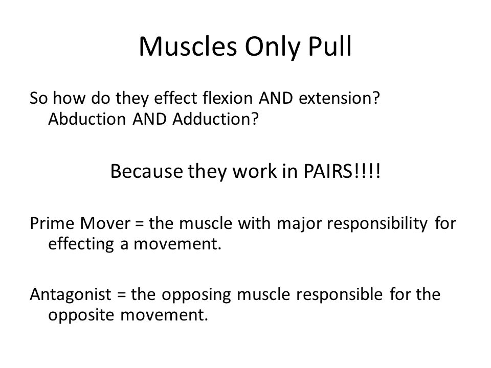 Muscles Only Pull So how do they effect flexion AND extension? Abduction AND Adduction? Because they work in PAIRS!!!! Prime Mover = the muscle with m