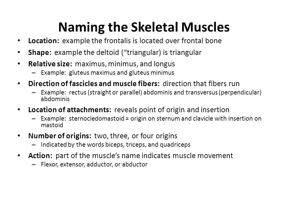 "Naming the Skeletal Muscles Location: example the frontalis is located over frontal bone Shape: example the deltoid (""triangular) is triangular Relati"