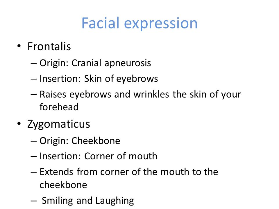 Facial expression Frontalis – Origin: Cranial apneurosis – Insertion: Skin of eyebrows – Raises eyebrows and wrinkles the skin of your forehead Zygomaticus – Origin: Cheekbone – Insertion: Corner of mouth – Extends from corner of the mouth to the cheekbone – Smiling and Laughing